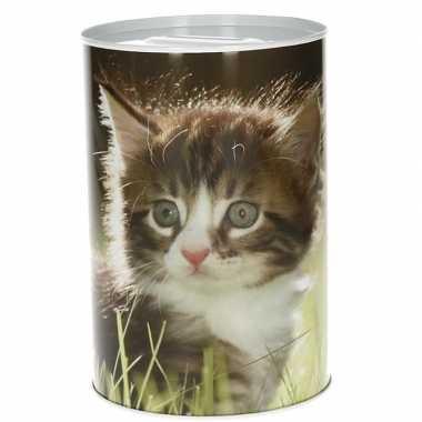 Grote kittens spaarpot type